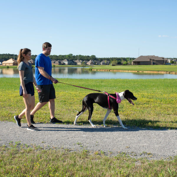 A couple walking their dog on a gravel path
