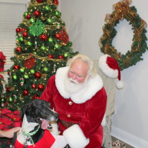 A dog with Santa
